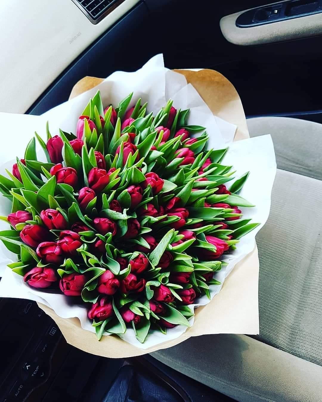 Raudonos tulpės / 101 vnt.