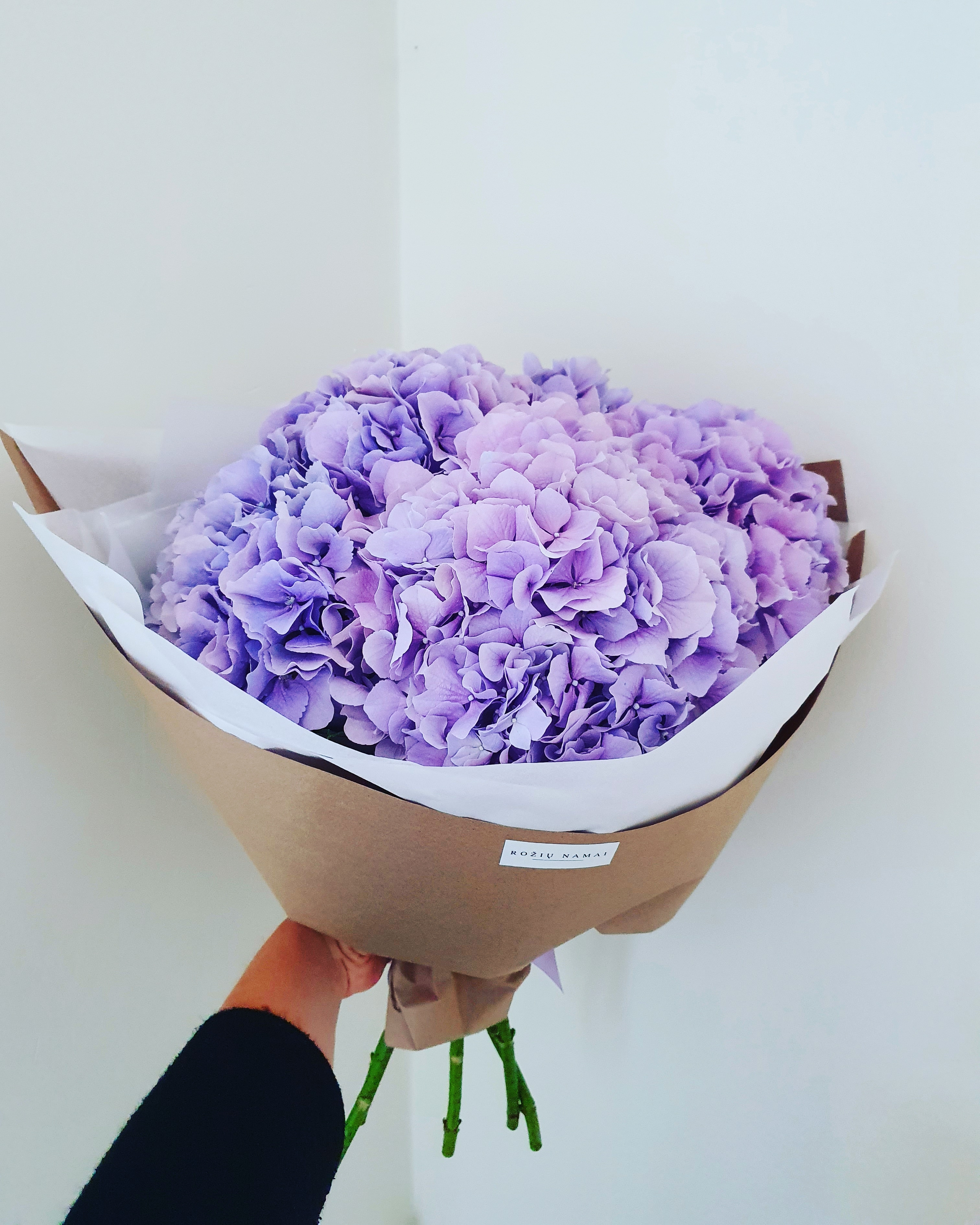 Hortenzijos / Lilac