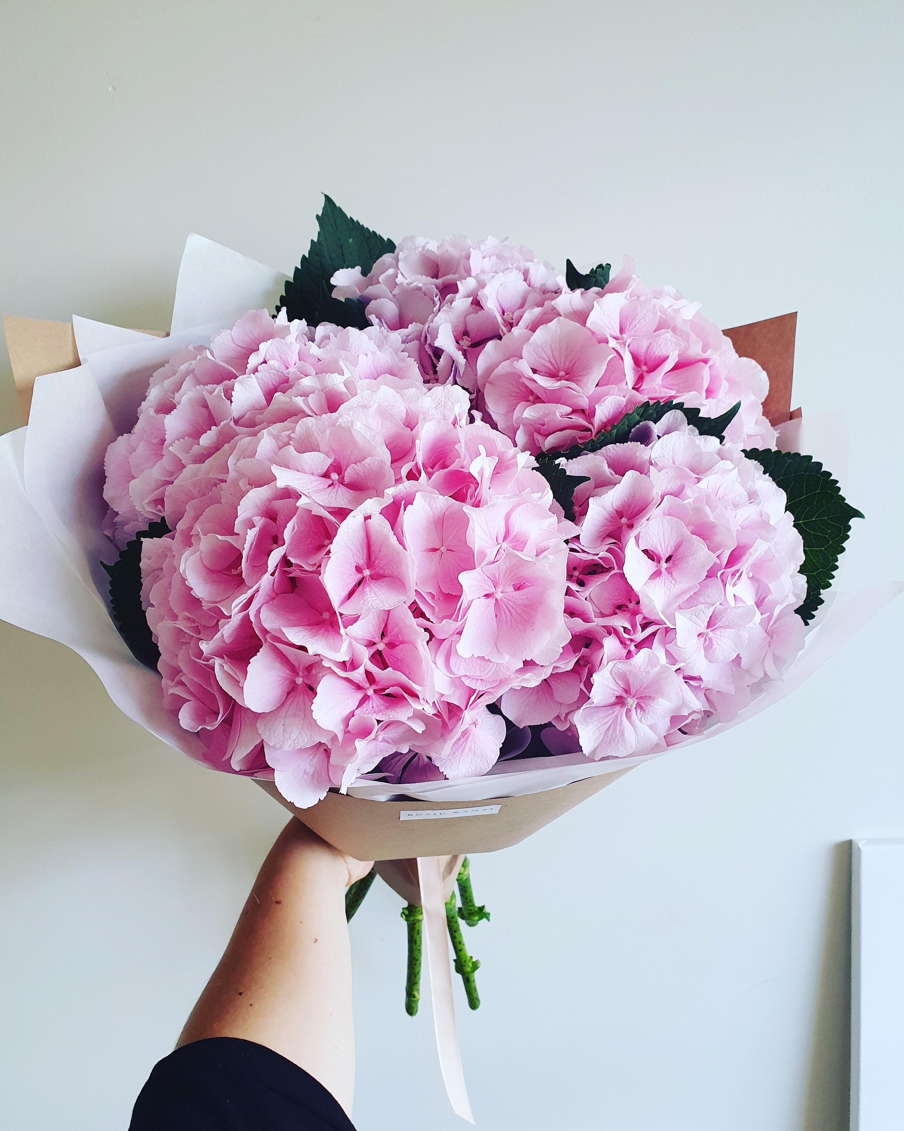 """Hortenzijos """"Rožinės"""" 5 vnt."""