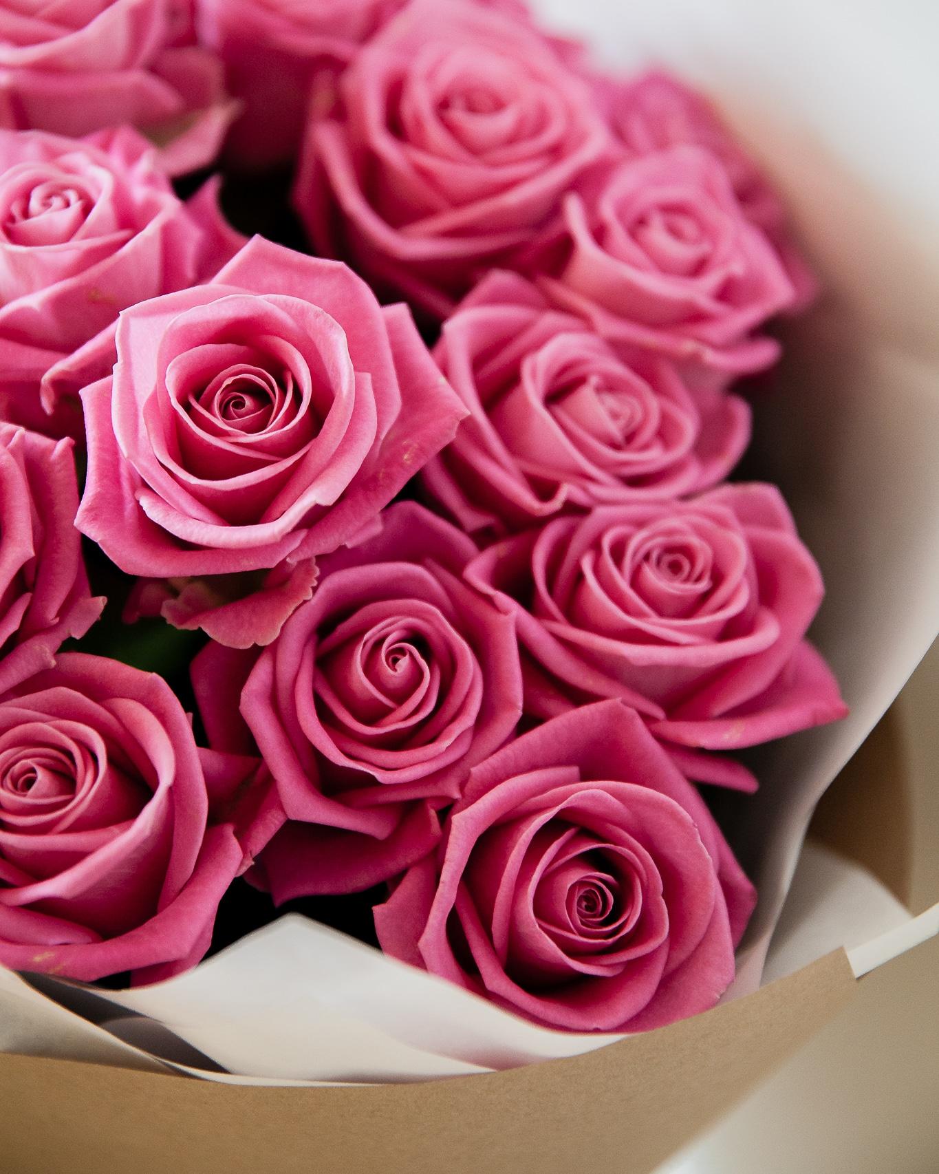 15 rožinių rožių Aqua